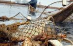 Статья 256 ук рф — незаконная добыча (вылов) водных ресурсов: состав преступления и меры ответственности
