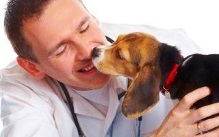 249 ук рф — нарушение ветеринарных правил и правил, установленных для борьбы с болезнями и вредителями растений
