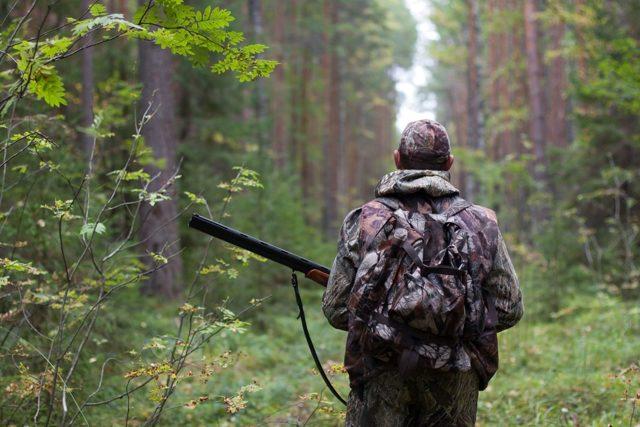Лицензия на охоту: как получить и какой штраф за отстрел без лицензии
