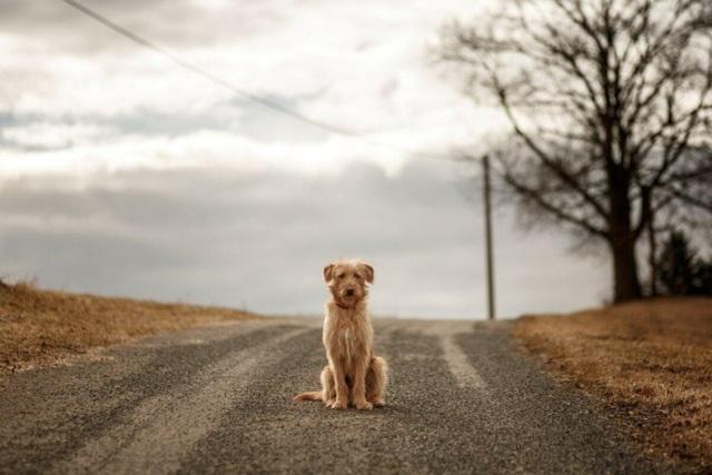 cбил собаку или другое животное: что делать, какой штраф и ответственность