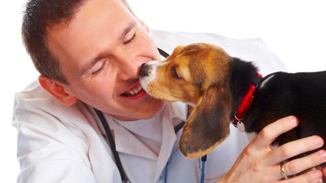 249 ук рф - Нарушение ветеринарных правил и правил, установленных для борьбы с болезнями и вредителями растений