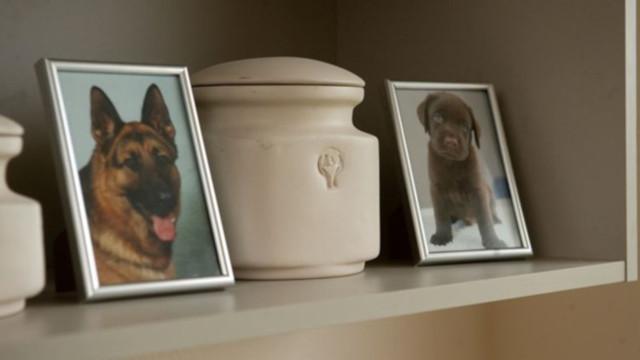 Лицензия на кремацию животных: где и как получить