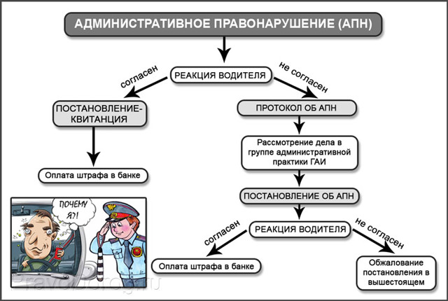 Чем отличается протокол от постановления ГИБДД