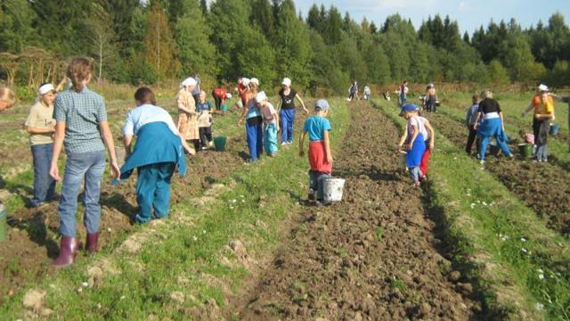 Эксплуатация детского труда: особенности законодательства и ответственность