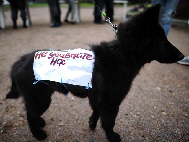 Жестокое обращение с животными - статья 245 УК РФ: особенности преступления и ответственность