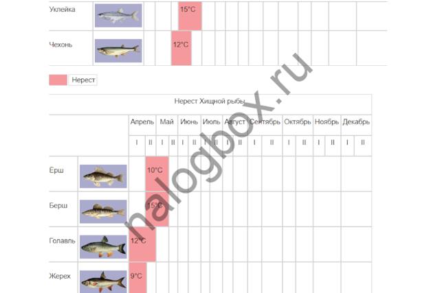 Лицензия на ловлю рыбы сетями: цена и способ получения