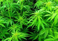 Статья за употребление наркосодержащих веществ в КоАП и УК РФ: составы преступлений и ответственность