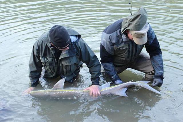 Статья 258 УК РФ - Незаконная охота: состав преступления и ответственность